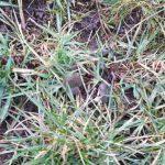 Nie tylko trawy rozpoczęły wegetację, również rośliny niepożądane obudziły się po zimie