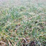 Trawy rozpoczęły wegetację