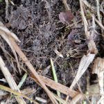 14.09.2018 - wysiane nasiona życicy i koniczyny