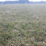 Użytek zielony po zimie przed ruszeniem wegetacji, widok ogolny