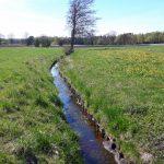 Różnica widoczna gołym okiem - po lewej łąka Grass Into Gold, po prawej użyek czekający na renowację