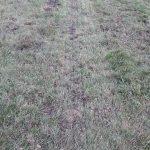 Podsiew traw przeprowadzony 20 września 2016