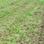 Tak wygląda łąka po zabiegu. Jutro podsiew!