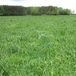 Odchwaszczona i zagęszczona łąka