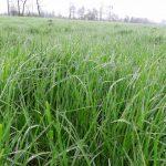 Łąka po okresie zimnej wiosny