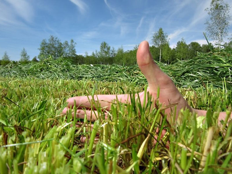 Prawidłowa wysokość koszenia traw