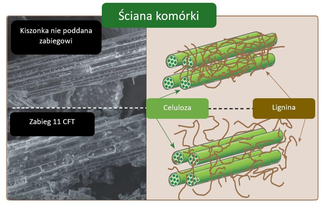Ściana komórki